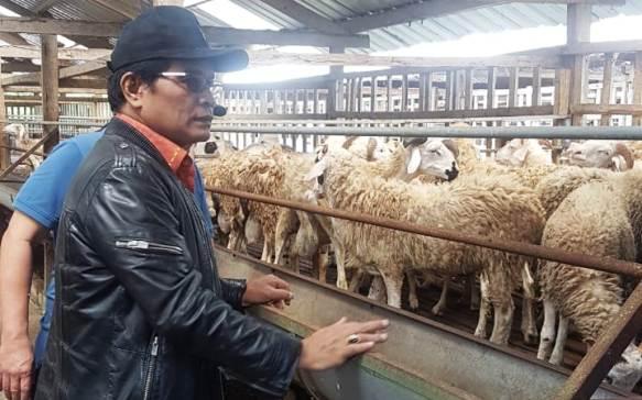 Ekspor Kambing Domba Janjikan Kesejahteraan untuk Peternak