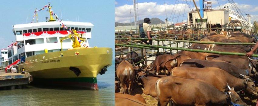Perjalanan Balik Kapal Ternak Bisa Dimuati Pakan