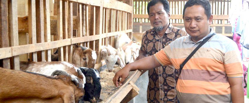 Penjualan Hewan Kurban Lesu, Pedagang Lampung Mengeluh