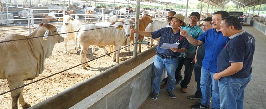 JAPFA Mendukung Swasembada Daging Nasional melalui Pengembangan Sapi Nelore