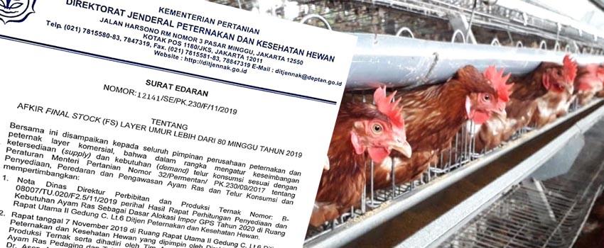 Ayam Petelur Komersil Umur 80 Minggu Wajib Diafkir