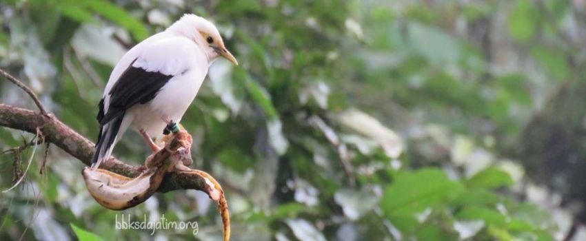 Potensi Ekonomi Penangkaran Burung