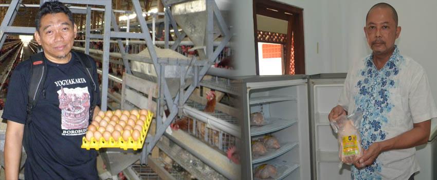 Berkah dari Pandemi, Ayam Organik dan Telur Herbal Laris