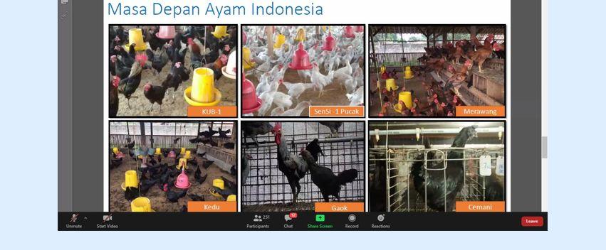 Membidik Arah Penelitian Ayam Lokal