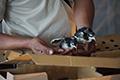 Meniti Bisnis Ayam Lokal