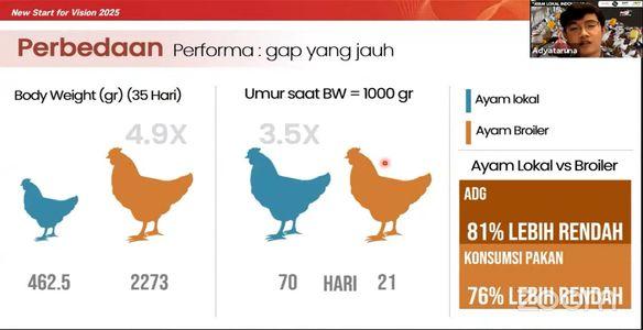 Pakan Broiler Bukan untuk Ayam Lokal
