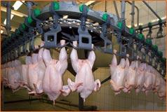 Produksi Unggas Naik, Konsumen Belum Siap. Genjot Konsumsi Ayam !