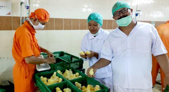 RI - Timor Leste Tingkatkan Kerjasama Bidang Peternakan
