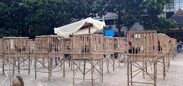 Kontes Ayam Pelung 2019