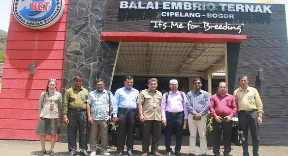 Bangladesh Berminat Impor Embrio Ternak Dari Indonesia