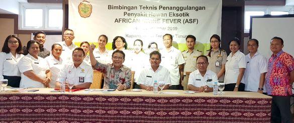 Waspadai Ancaman ASF dari Timor Leste