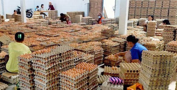 Harga Ayam dan Telur Berangsur Membaik
