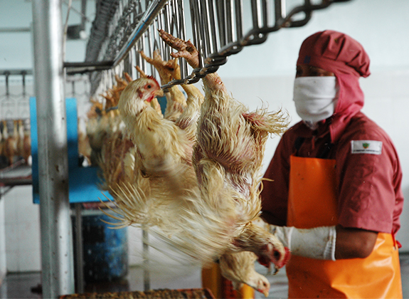The Urgency of Coaching for Juleha Poultry