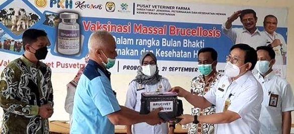 Vaksinasi Brucelosis di Jawa Timur